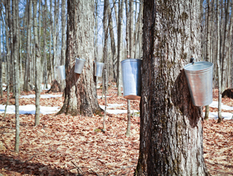 Maple Syrup: Quebec Is Hurting Its Producers and Encouraging Its Competitors